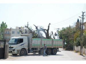 Elektrik Tellerini Kopartan Kamyon Mahalleyi Elektriksiz Bıraktı