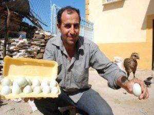 Tanesini 10 Liradan Sattığı Yumurtalarını Almak İçin Türkiye Sırada