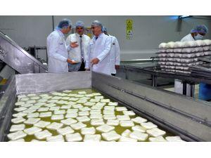 Salihli'den Dubai ve Bahreyn'e Mozzarella peyniri ihracat ediyor