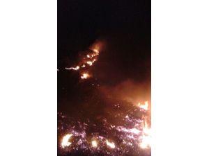 Cide'de Korkutan Orman Yangını