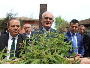 Büyükşehir Belediyesi'nden 25 Bin Şeftali Anacı Dağıtımı