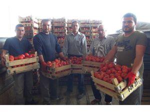 Mersin'den Irak'a Domates İhracatı Başladı
