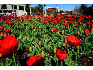 Malatya'yı Baştan Başa Çiçek Bürüyor