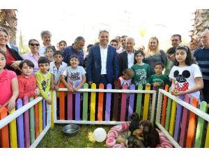 Muratpaşa Belediyesi, 13 Köpek Ve 5 Kediyi Sahiplendirdi