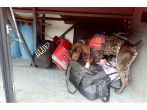 Narkotik Köpeklerden Kaçış Yok