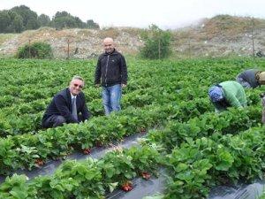 Eskiden Göç Veren Köyler Çilek Sayesinde Göç Alıyor