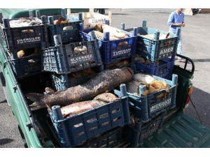 300 Kilo Kaçak Avlanan Balık Ele Geçirildi