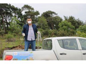 Tilkilere Kuduz Aşısı