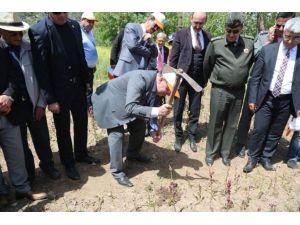 Muğla'da Endemik Bitkiler Korunuyor