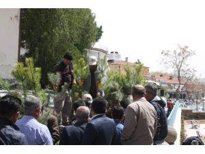 Uçhisar Belediyesi Ücretsiz Fidan Dağıtımı Yaptı