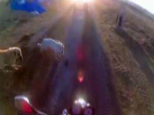 Saldırgan Köpekler Motosikletçiyi Böyle Düşürdü