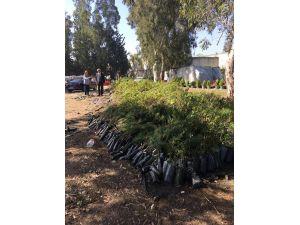 Orman ve Su İşleri Bakanlığı'ndan fidan desteği