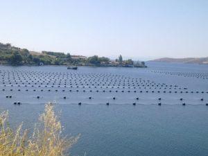 Marmara Denizi'nde Midye Çiftliği Tehlikesi