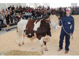 Tarım Ve Hayvancılık Sektöründen Dev Buluşma