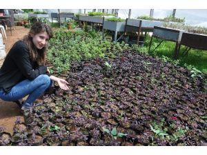Silifke Belediyesi Yılda 150 Bin Çiçek Üretiyor