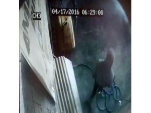 Çöp Kutusu Hırsızı Güvenlik Kamerasında