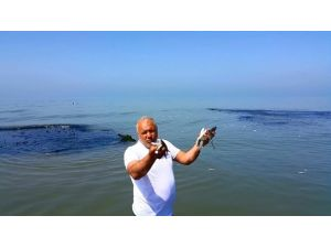 Mersin'de Sahile Binlerce Ölü Balık Vurdu