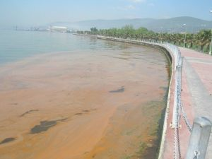 Körfez'deki Sarı Tabakanın Sebebi Mevsimsel Değişiklik