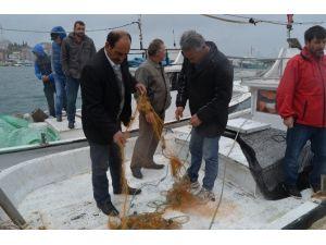 Deniz Salyongozu Avlayan Balıkçılar İsyanda