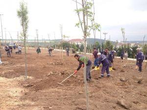 Bayrak Tepe Parkında Ağaçlandırma Devam Ediyor