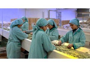 Baharatçılar Dünya İle Rekabet İçin Destek İstiyor