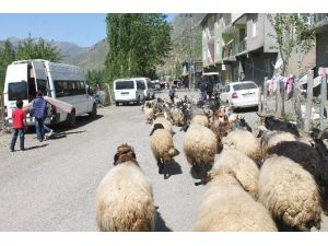 23 Nisan'da Da Çobanlık Yaptılar