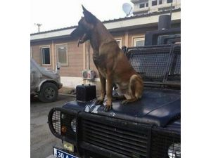 Pöh Köpeği Barut PKK'lılar Tarafından Öldürüldü