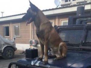 PÖH Köpeği Barut, PKK'lılar Tarafından Öldürüldü