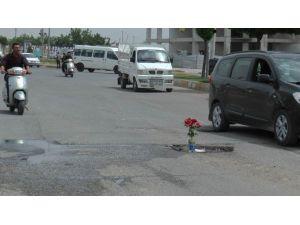 Kaza Olmasın Diye Asfalta Gül Diktiler
