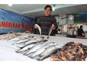 Av Yasakları Balık Fiyatlarına Olumsuz Yansıdı