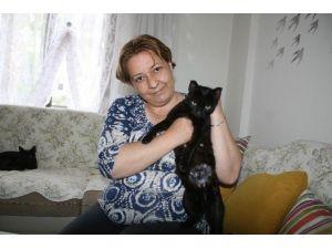 Kısırlaştırılmaya Götürülen Hamile Kedinin Yavruları Yok Oldu