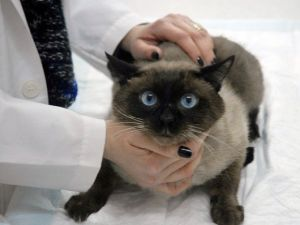 Evcil Hayvanlarda İlkbahar Hastalıklarına Dikkat