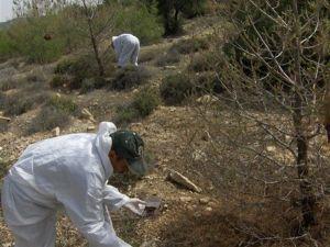 Orman Zararlılarıyla Biyolojik Mücadele