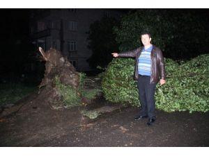 Zonguldak'ta Fırtınada Çatılar Uçtu, Ağaçlar Devrildi
