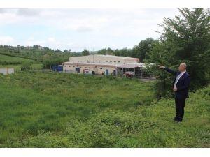Tekkeköy Hayvan Pazarı İlçe Merkezinden Çıkartılıyor
