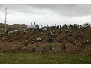 İpekyolu İlçesinde 50 Bin Ağacın Dikimine Başlandı