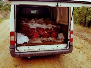 Edirne'de 1 Ton 825 Kilogram Canlı Midye Ele Geçirildi