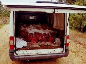 60 bin TL değerinde kaçak midye ele geçirildi