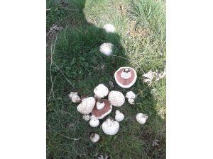 Dr. Karaarslan: Bilinçsizce tüketilen mantar zehirlenmelere sebep olur