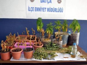 Muğla, Marmaris Ve Datça Polisinden Ortak Uyuşturucu Operasyonu