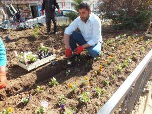 Malazgirt'te Yeşillendirme Çalışmaları
