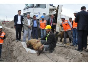 Patnos Belediyesi Canlı Hayvan Pazarı'nın Temelini Attı