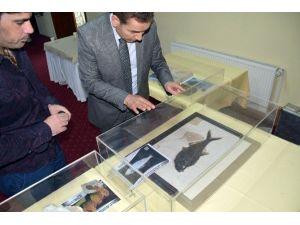 İzmir'de 513 Milyon Yıllık Deniz Lalesi Merakı