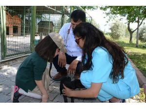 Çocuklar hayvanların kalp atışını dinledi