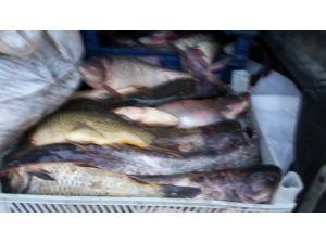 520 Kilo Kaçak Balık Ele Geçirildi