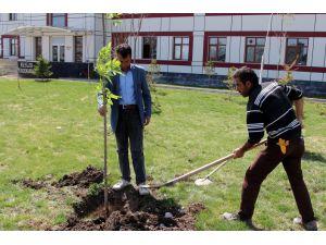Üniversite kampüsüne 15 bin ağaç dikildi
