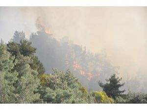 Zeytinlik Alandaki Yangına Yol Olmayınca Müdahale Gecikti