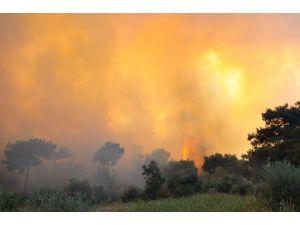 Aydın'daki Yangın 6 Saatte Kontrol Altına Alındı