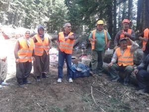 Keles Ormanları Gençleştiriliyor