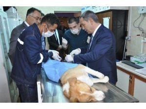 Doktor Başkan Hasta Köpeği Ameliyat Etti